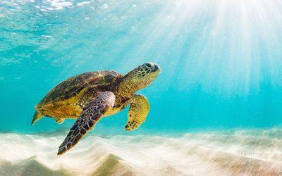 L'impact de la pollution plastique sur la biodiversité marine